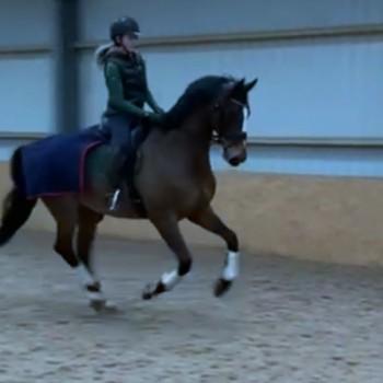 Martha Jobling-Purser exercising horse