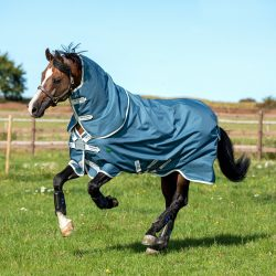 horse wearing amigo ameco turnout rug in the field