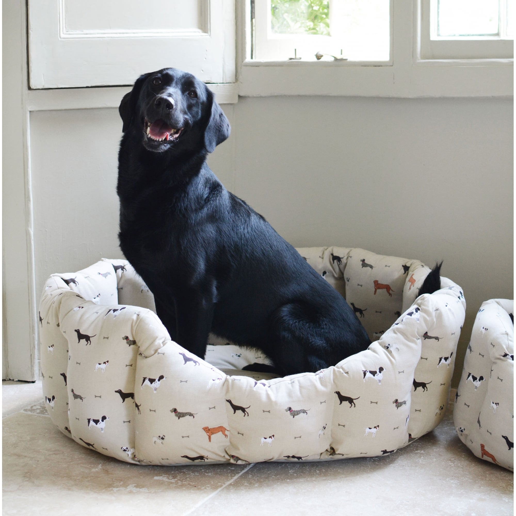 best pet beds happiness for dog dogs make large sure couch bed howls your with beasleys small
